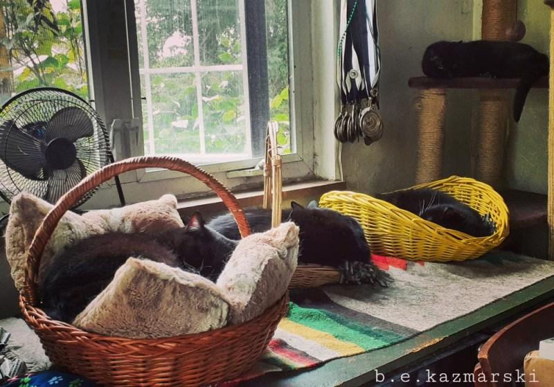 basket day