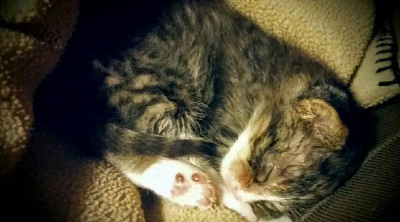 The tiny abandoned kitten.