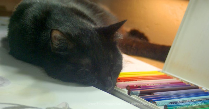 Mewsette fits right in between the palette and the pencils.