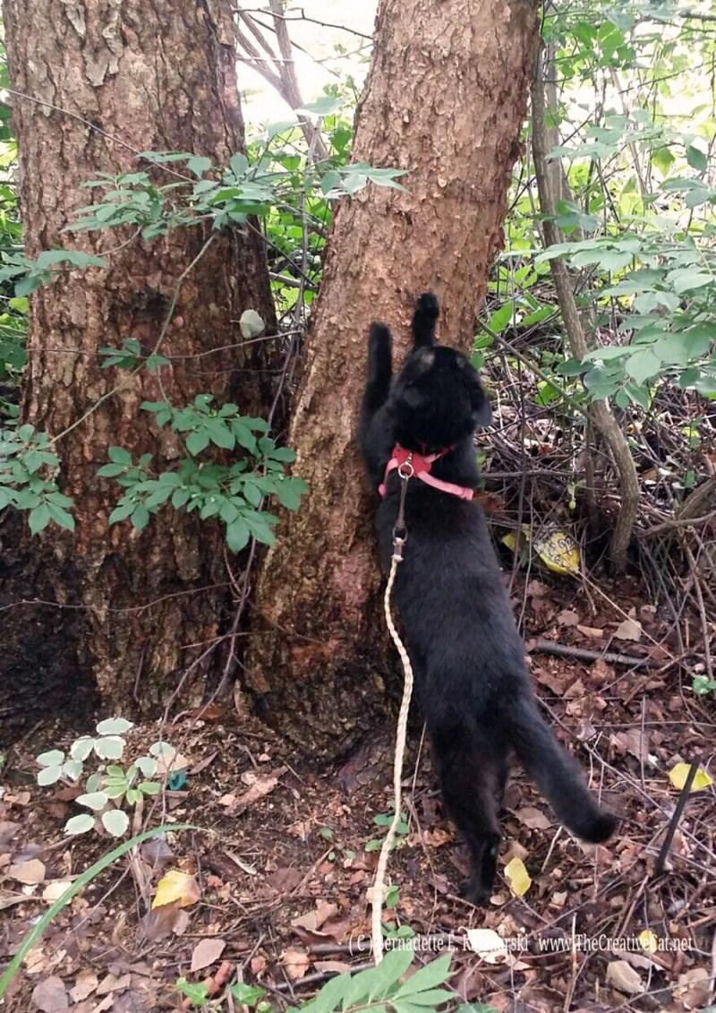 Mimi's authentic cat tree.