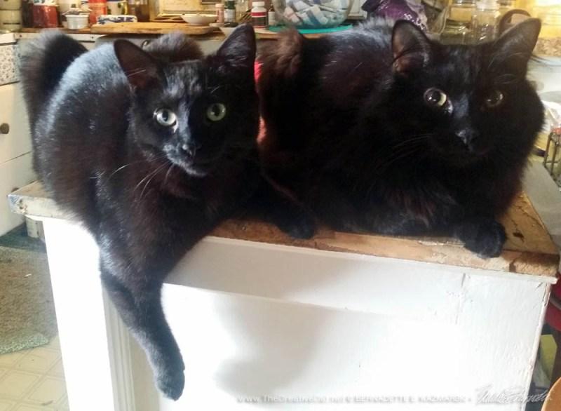 Bella and Basil are still pretty close..