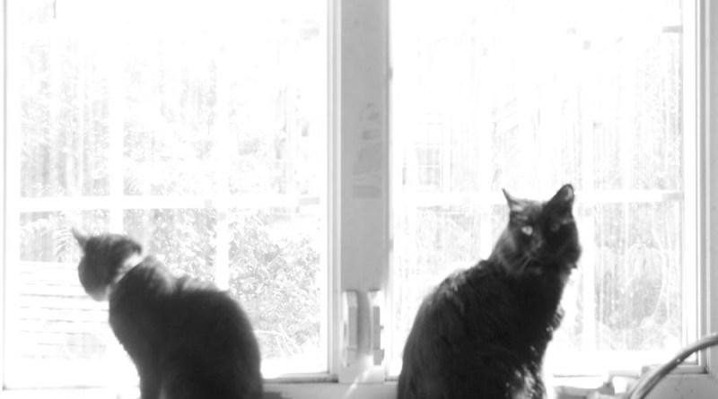 A Sunny Window