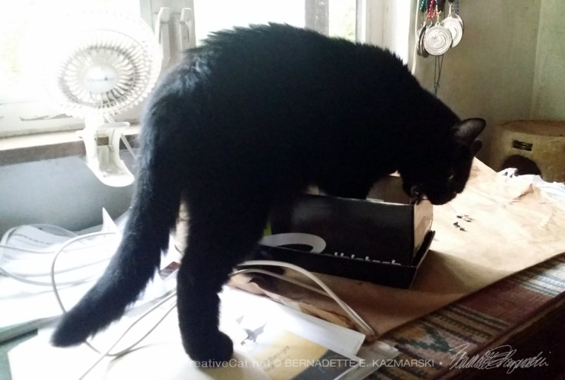 black cat with shoebox