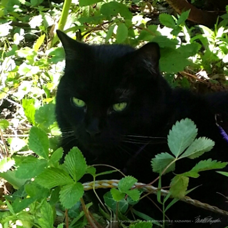 Green Eyed Camouflage