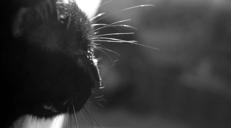 Whiskers alight