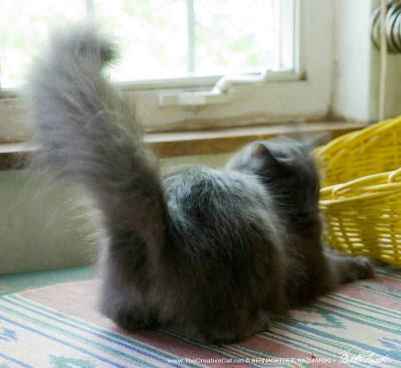 Tail chasing!