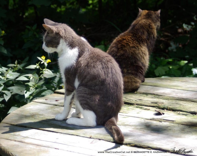 """A magical morning in the back yard with Namir and Cookie; this was just four days before Namir died; read """"Old Friends"""" (click on photo)."""