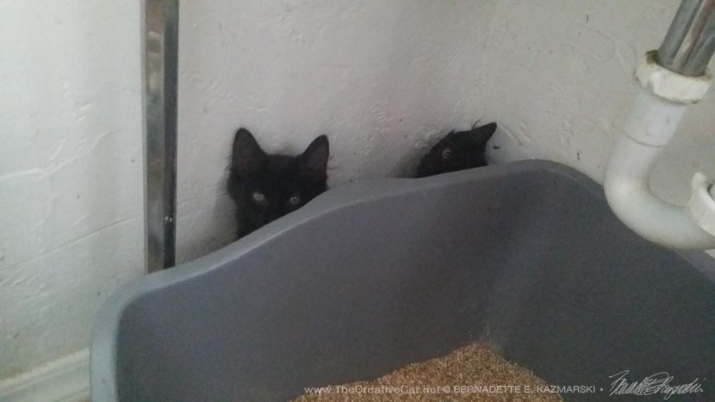 What would frightened kittens do if not for litterboxes to hide behind?