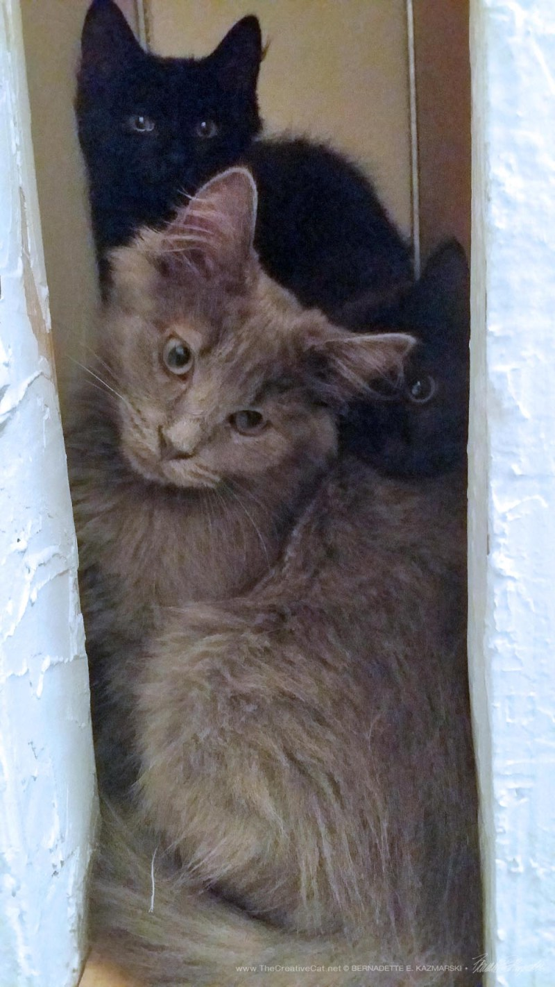 All three kittens can fit in here.