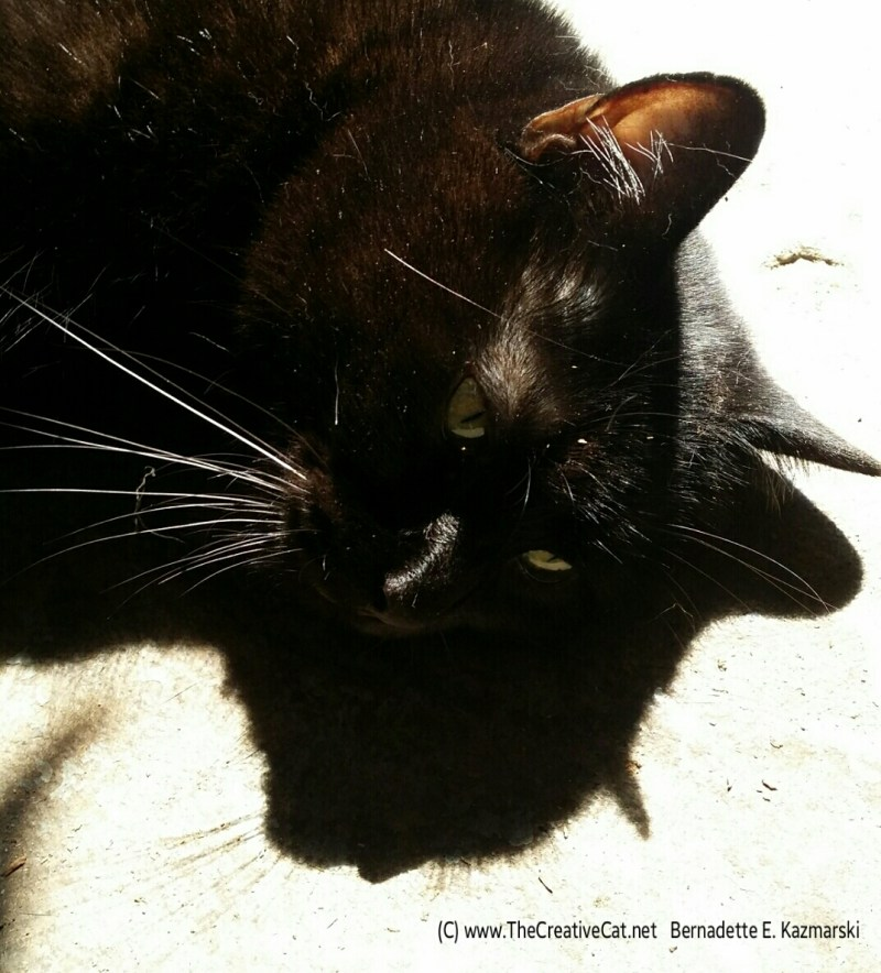 Mewsette and her shadow.