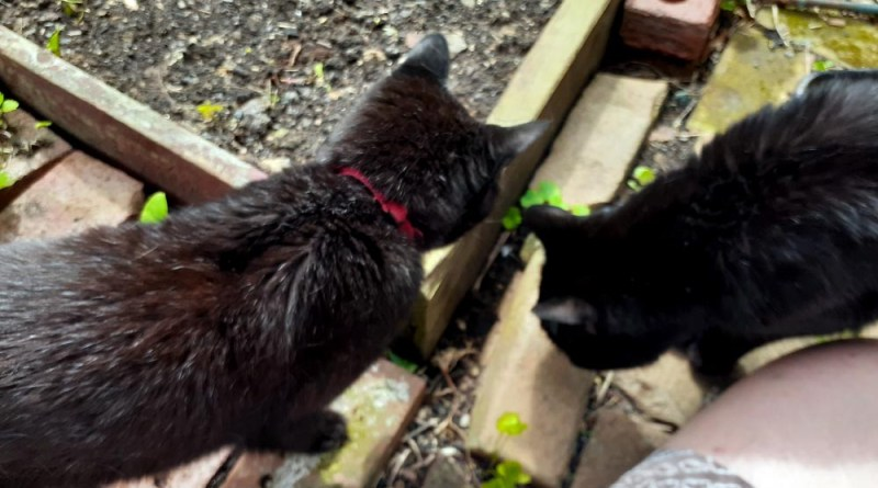 two black cats in a garden