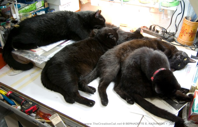 Now they've made it a family affair. Really, I can't tell you what an amazing thing it is to turn around and see this pile of happy black cats, and they have no idea what a wonder they are. I don't know how I get anything done some days.