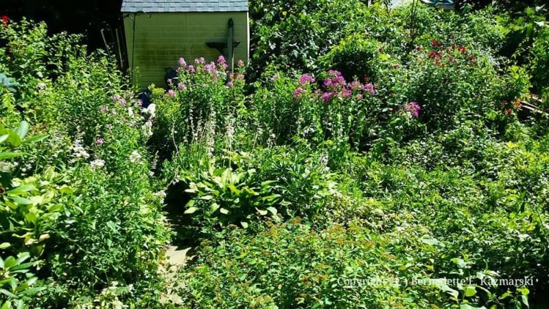 The rain garden.