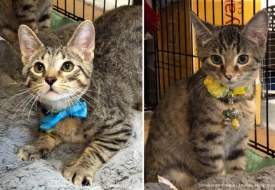 Cats for Adoption: Mork and Mindy, and Kitten Collars for Sale!