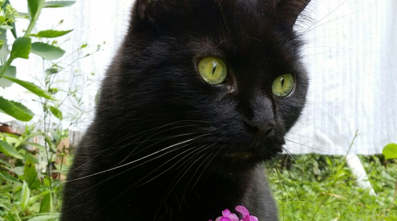 Mewsette with her green eyes and pink flower.