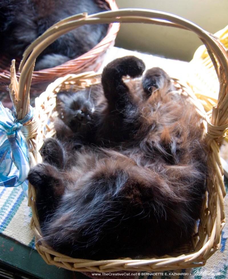Hamlet in the basket.