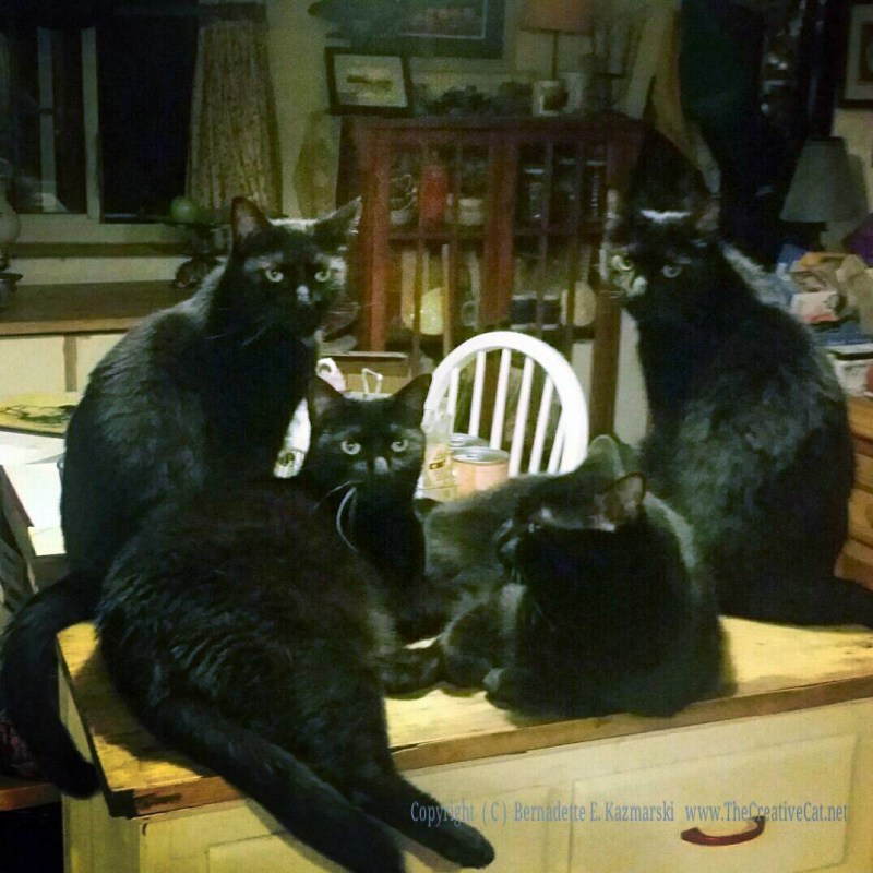 The Four Housecats of the Apocalypse.
