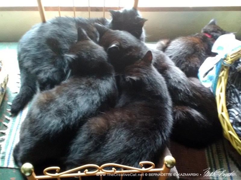 Piled up on the kitty day bed.