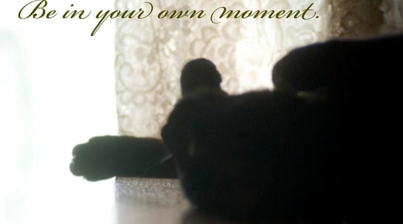 black cat and quote