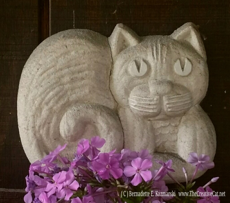 Welcome Kitty with phlox.