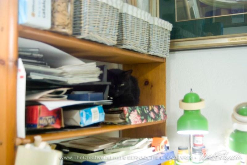 black cat on shelves