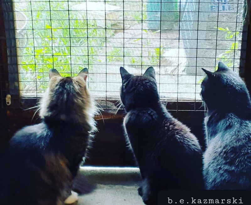 three cats at door