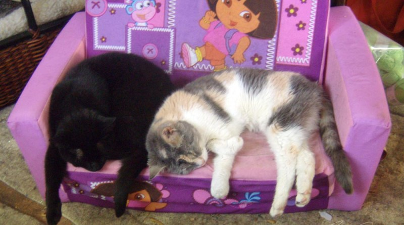 two cats on dora bed