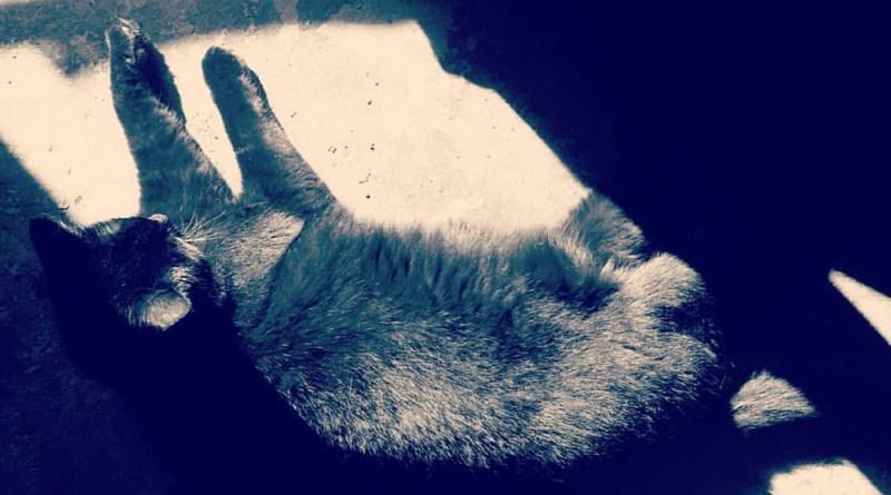 Bella sunbather filtered.