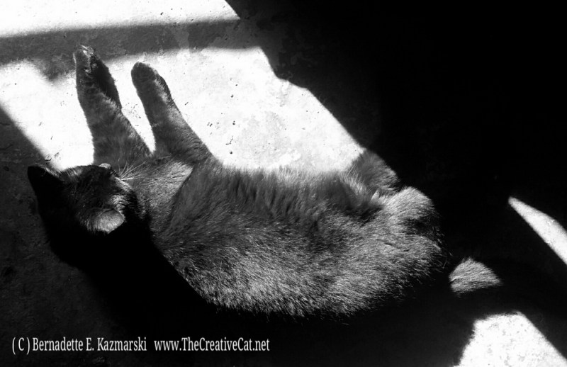 Bella sunbather black and white.