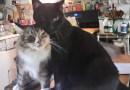 Daily Photo: Mariposa Loves Her Fur Siblings