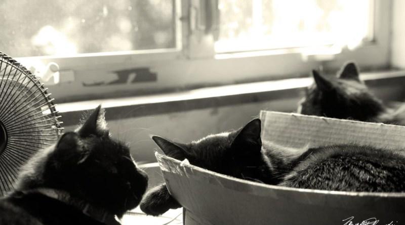 Celebrating World Cat Day