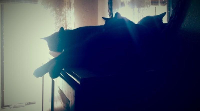cats sleeping by window
