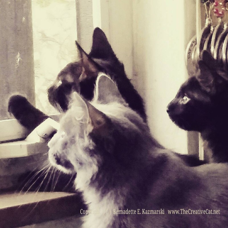 The kittens meet the big north window, and the bird feeder.