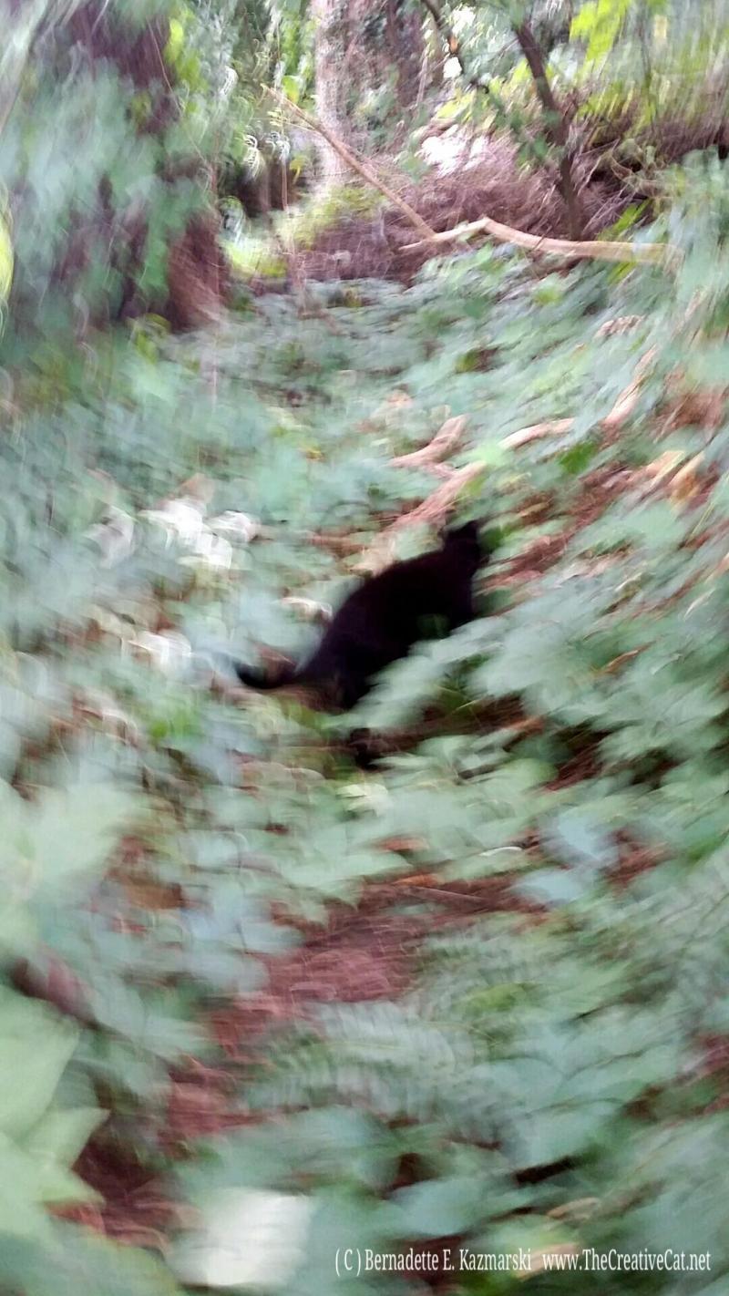 Mimi runs through the undergrowth.