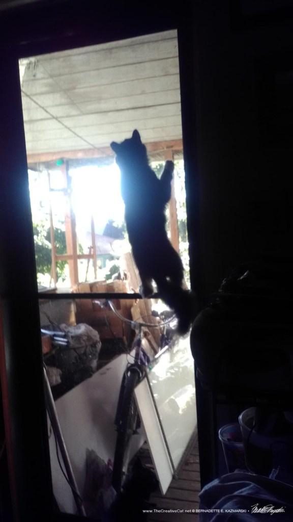 Mariposa climbing the door.
