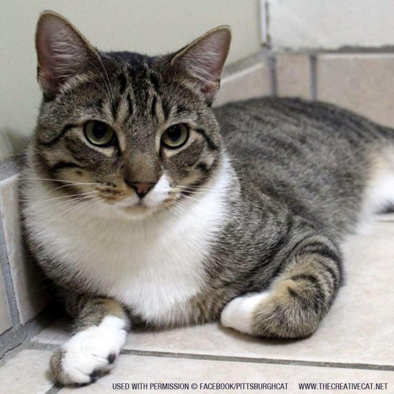 Marcello is available for adoption through Pittsburgh CAT.