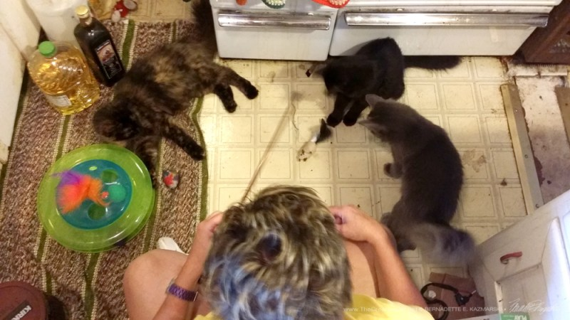 Basil, Theodore and Alvina came to play too.