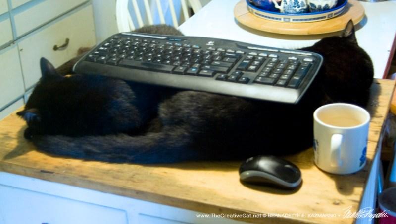 Black Cat Keyboard Rest!