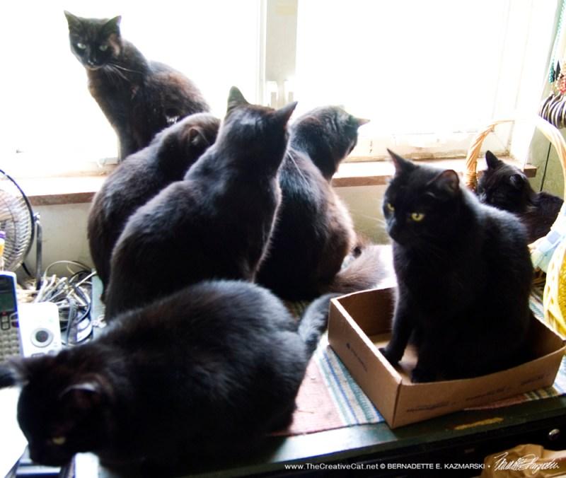 Celebrating black cat appreciation day!