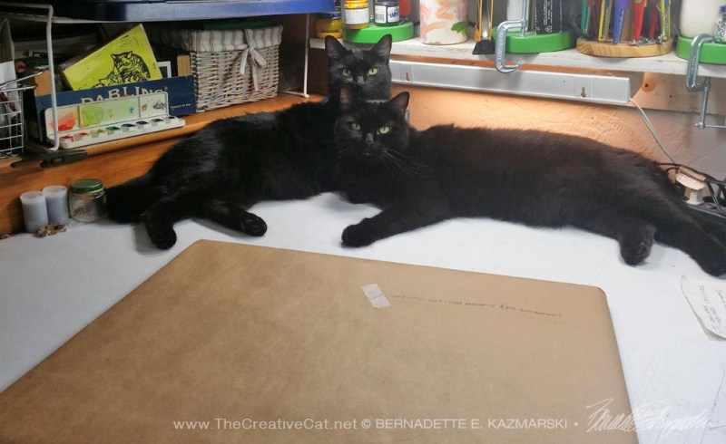 two black cats with package