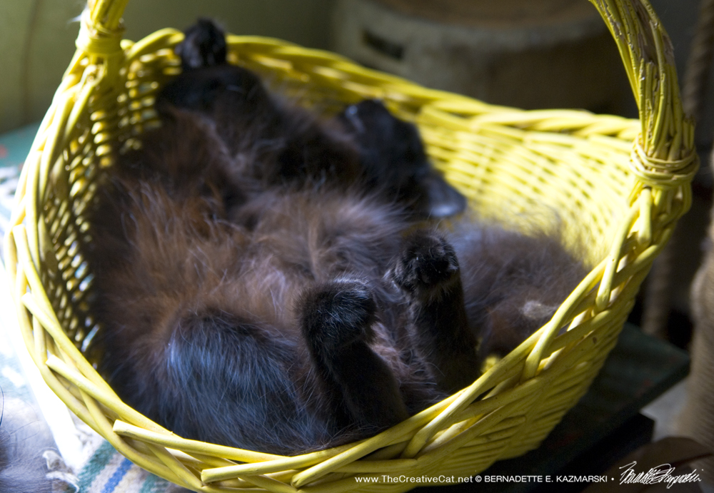Daily Photo: The Magic Yellow Basket