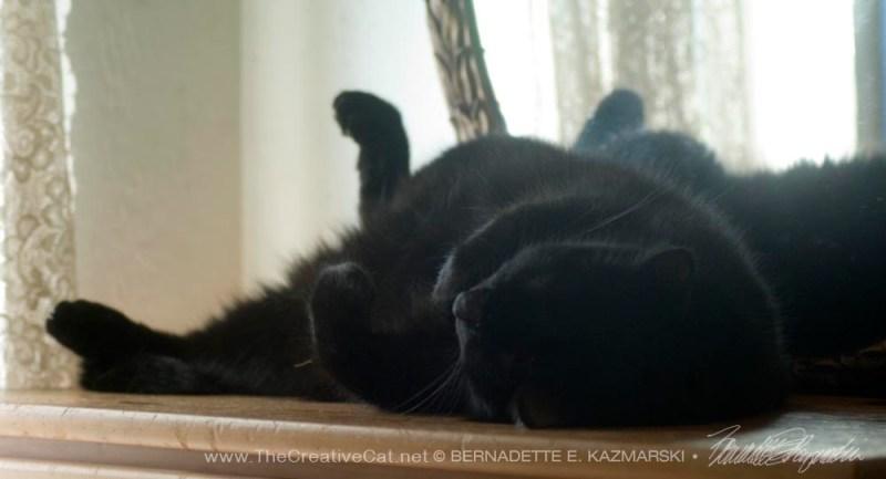 black cat on back