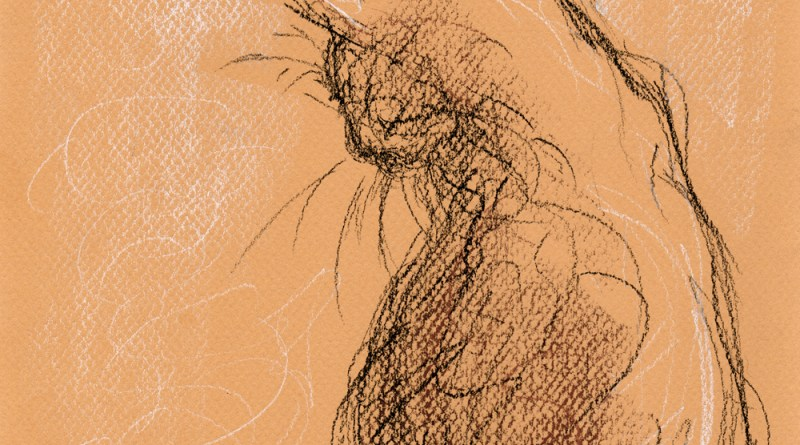 conte crayon sketch of cat bathing