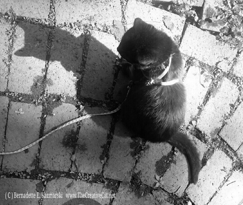 Mimi on the bricks, black and white.