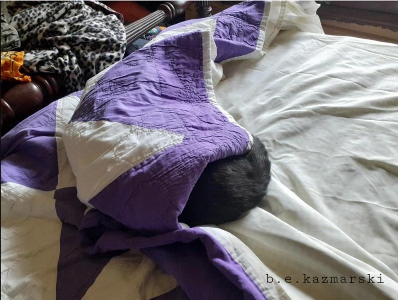 Giuseppe in the quilt.