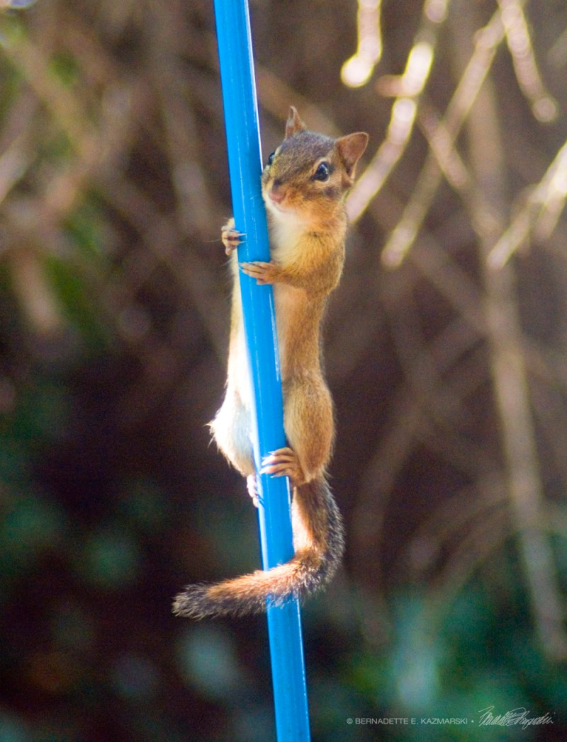 Climbing that pole is no problem.