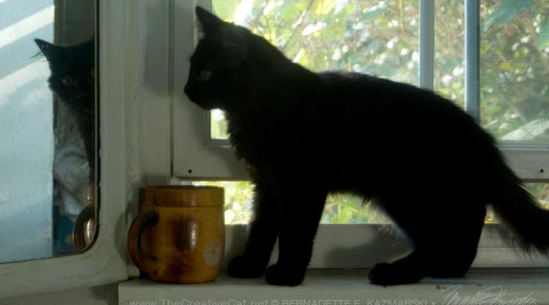 black kitten on windowsill