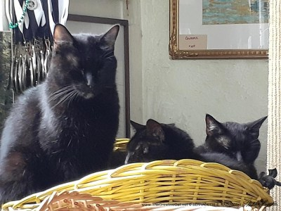 three black cats in a yellow basket