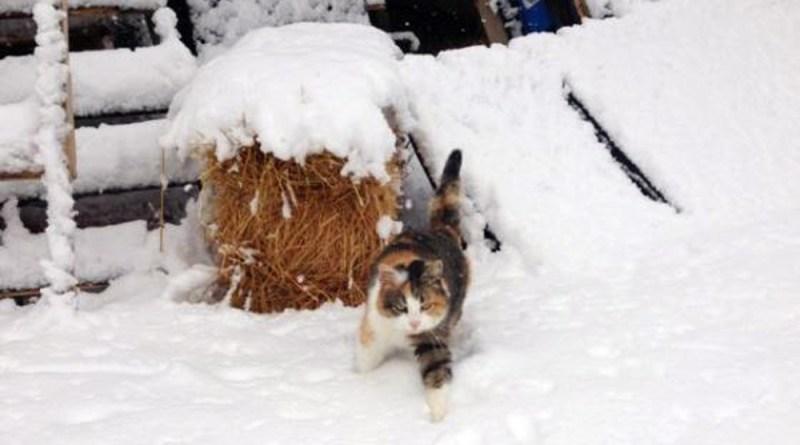 Auntie walks through the snow.