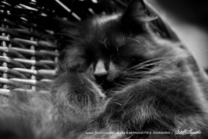 Hamlet tucks himself into a nice comfy basket for and afternoon nap.